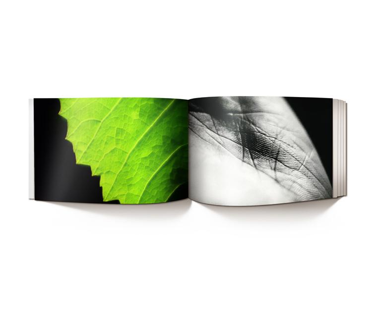sawit_brochure_5